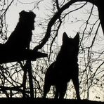 Schwarze Hunde