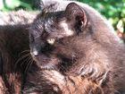 Schwarze Katze :-)