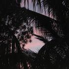 Schwarze Palmen