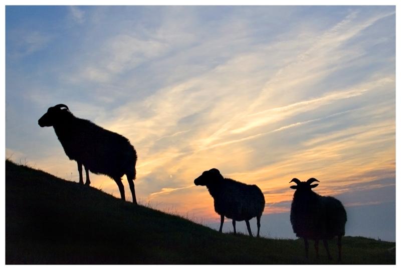 Schwarze Schafe...