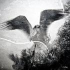 Schwarze und weiße Vögel