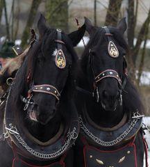 Schwarze Zwillinge II