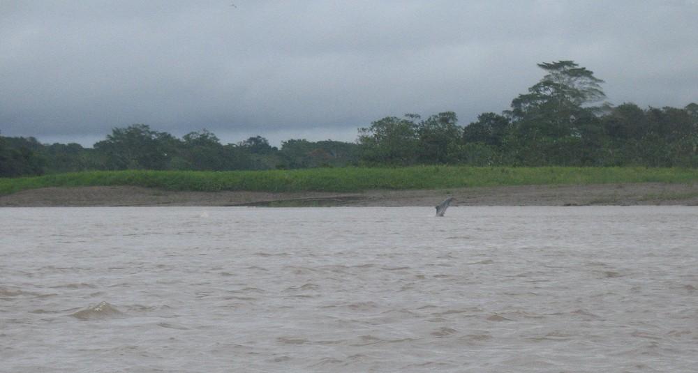 Schwarzer Delfin