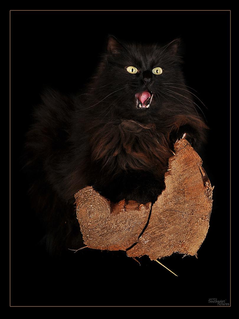 Schwarzer Teufel