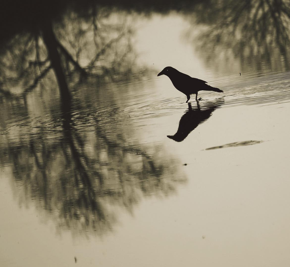 Schwarzer Vogel ......