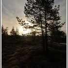 Schwarzes Moor im Sonnenaufgang
