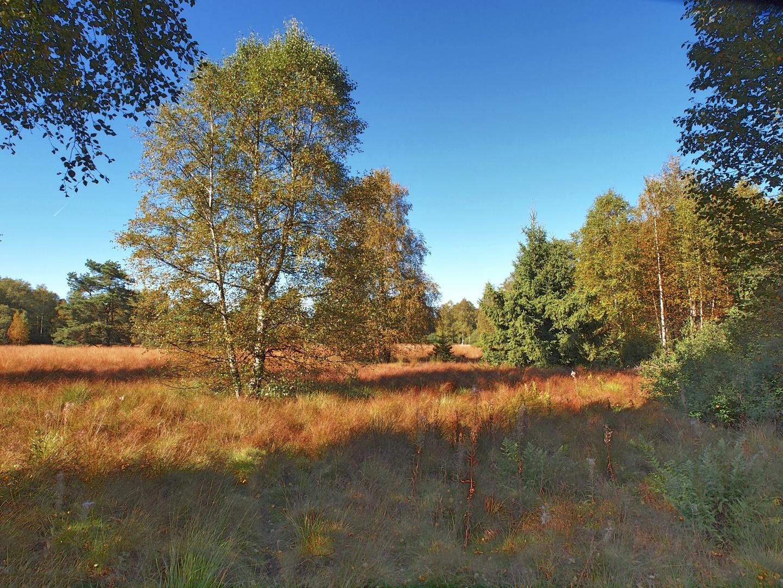 Schwarzes Moor / Rhön