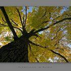 Schwarznuss im Herbst