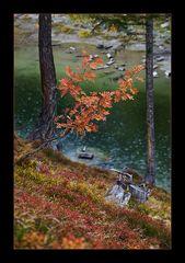 Schwarzsee(VS)-Vogelbeere