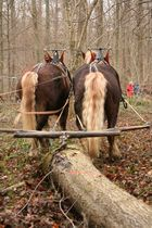 Schwarzwälder bei der Waldarbeit
