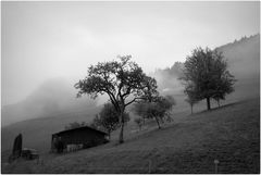 Schwarzwald (1)