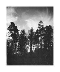 Schwarz.Wald