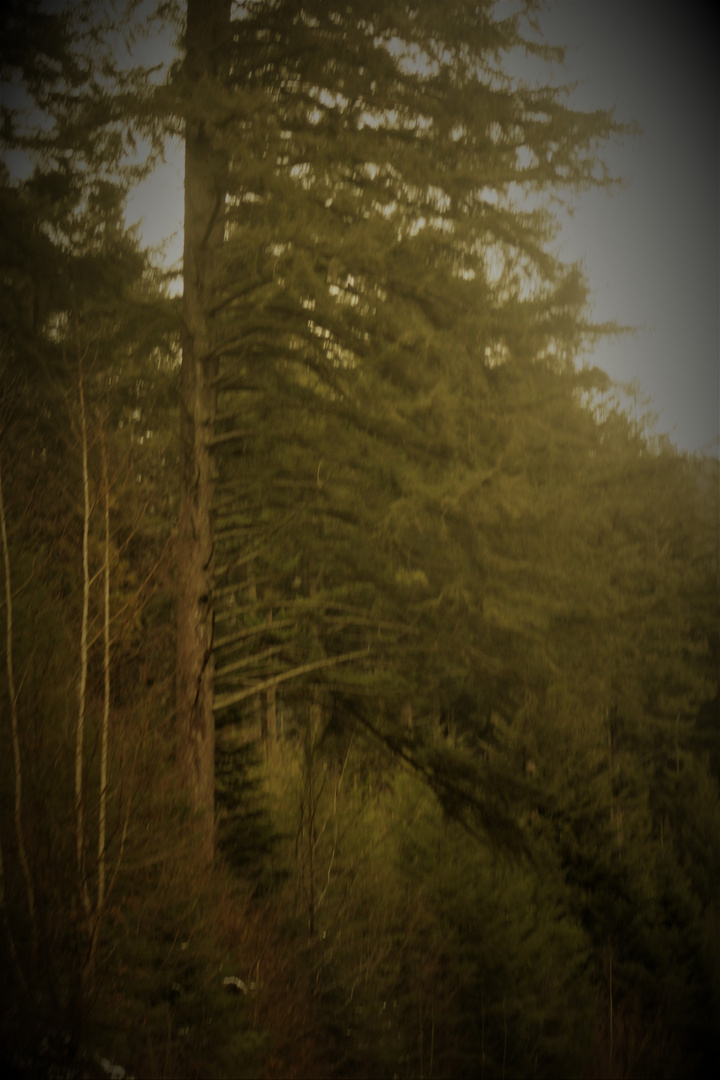 Schwarzwald Ansichten