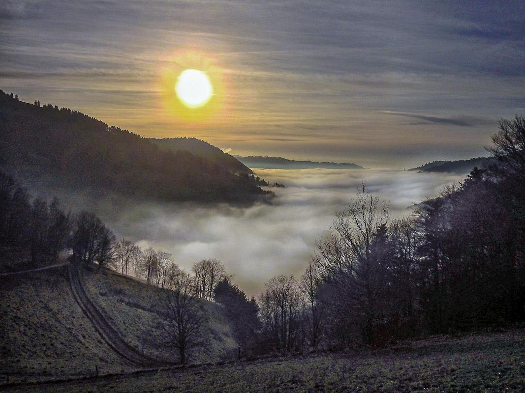 Schwarzwald im Nebel