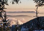 Schwarzwald im Nebelschleier