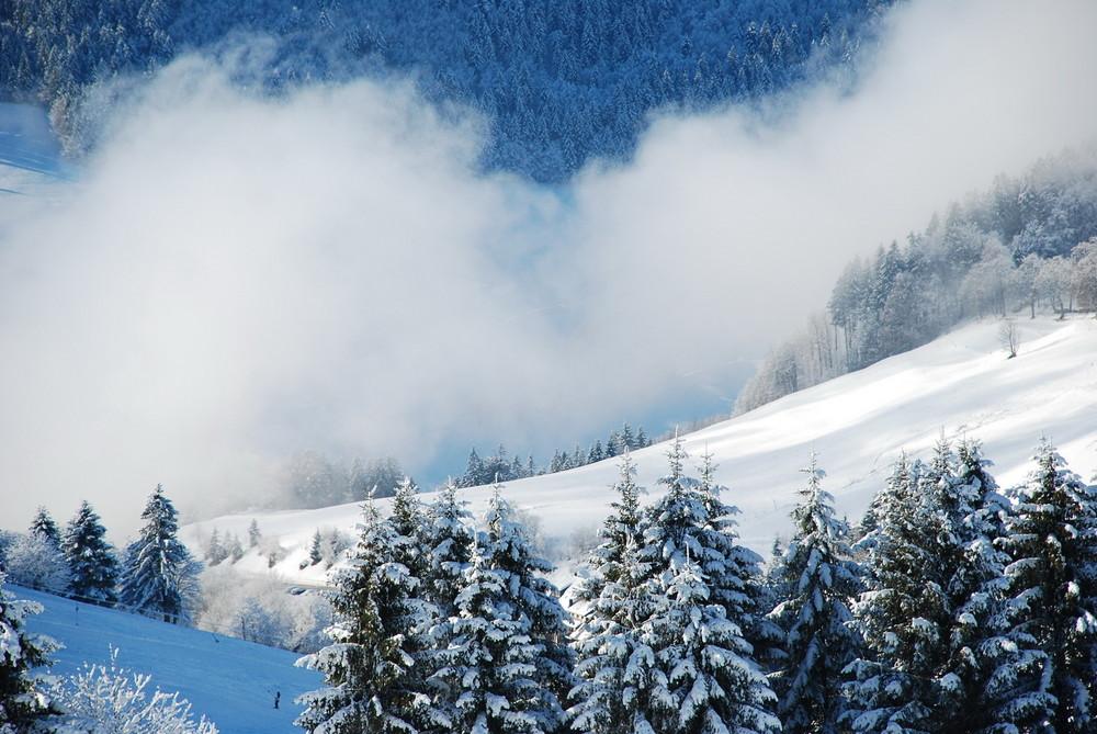 Schwarzwald-Impression 1