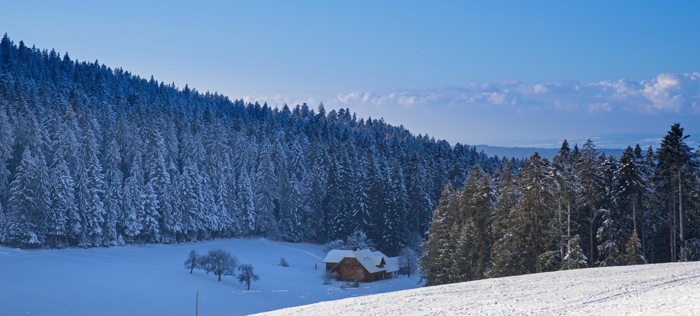 Schwarzwald oder Emmental ?