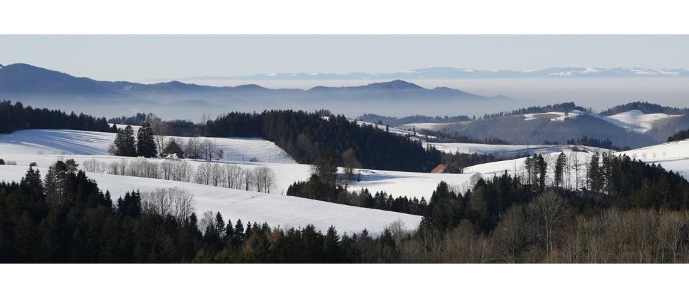 Schwarzwald-Panorama