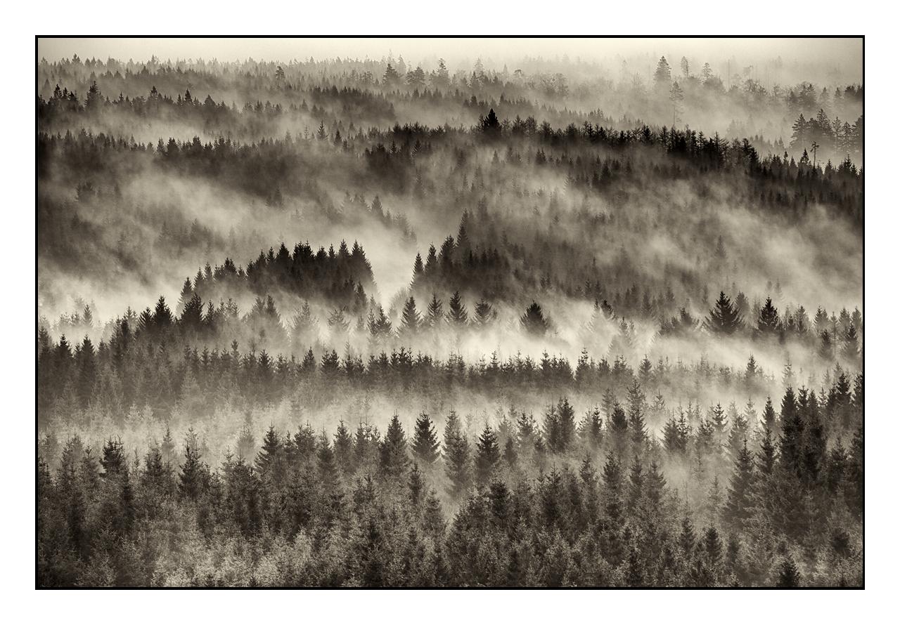 Schwarzwaldmorgen