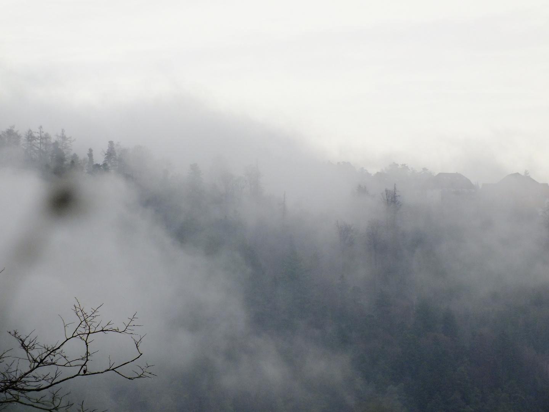 Schwarzwaldnebel