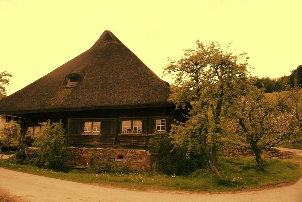 Schwarzwaldzauber