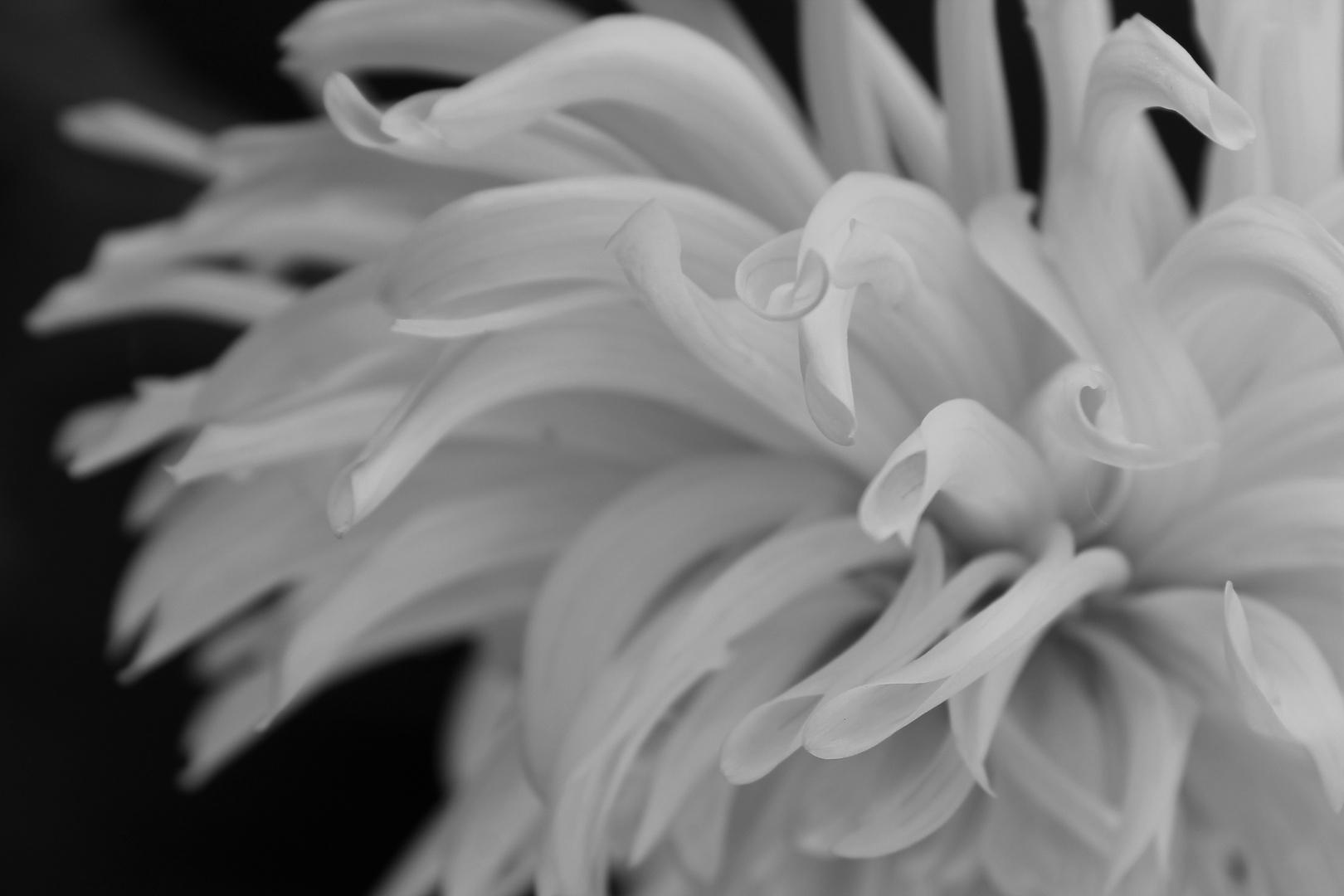 Schwarz&Weiß