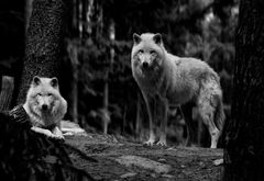 Schwarz/Weiss....