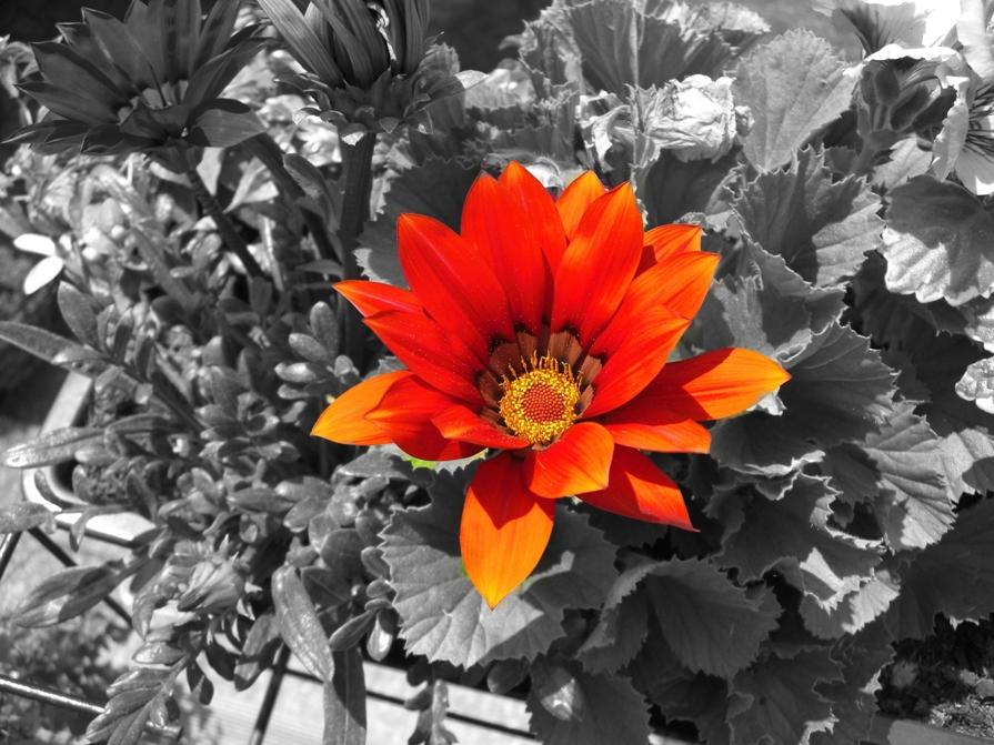 Schwarzweiß Mit Farbe Foto Bild Pflanzen Pilze Flechten