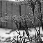 Schwarzweißer Freitag - Gräser