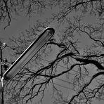 Schwarzweißer Freitag - Licht für die alte Eiche