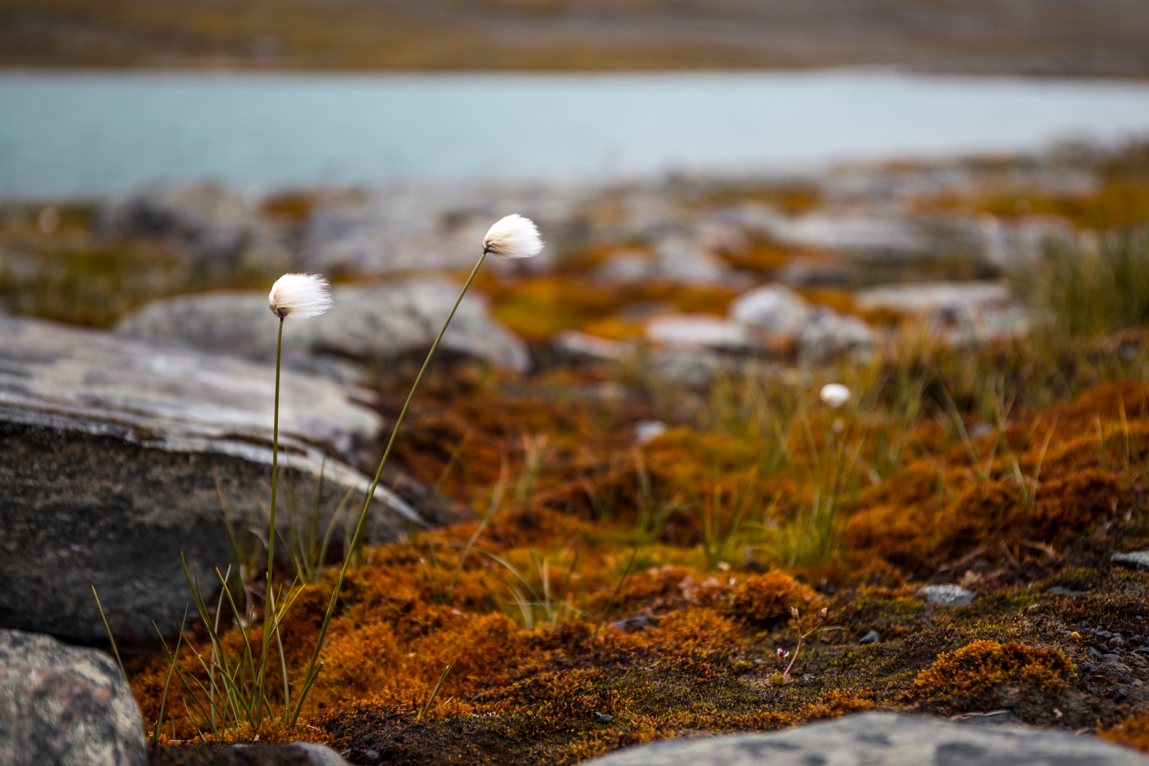 Schweden Blumen
