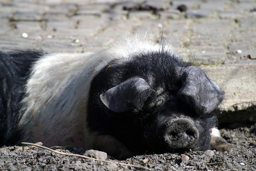 Schwein gehabt!!!