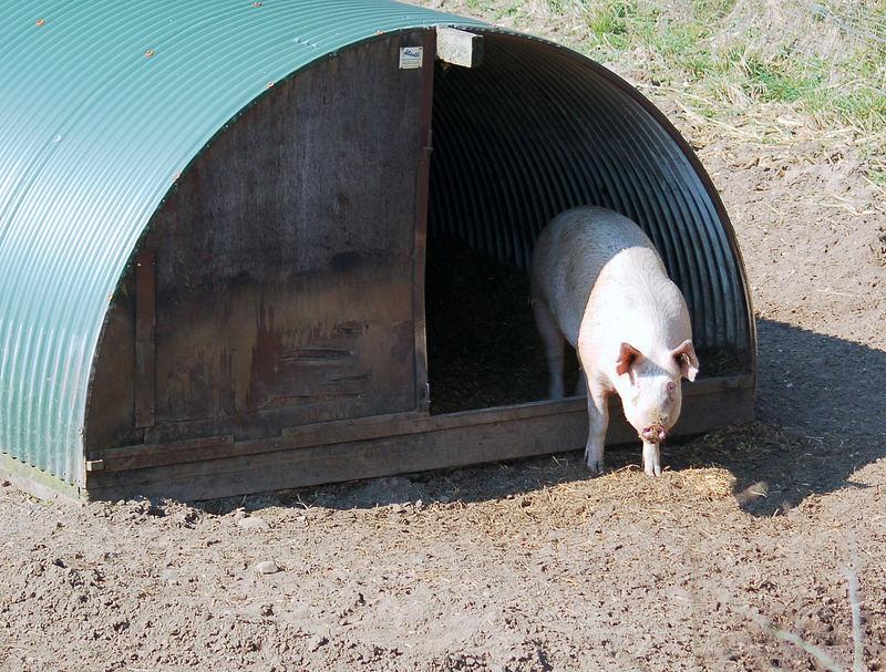 Schwein gehabt, dieses Appartement war noch leer