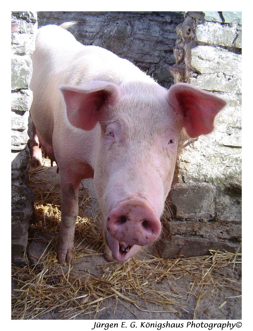 Schwein gehabt, oder auch die Sau ist los.