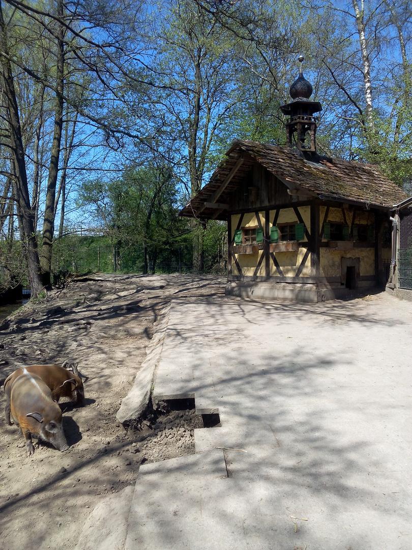Schweinchen im Park