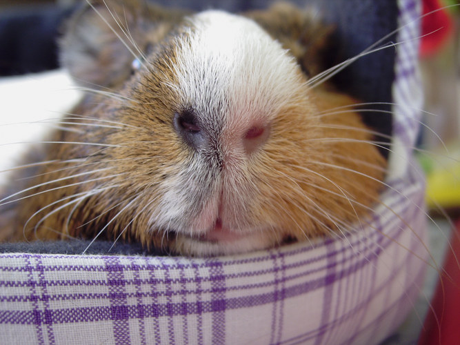 Schweinchennäääääääse =)