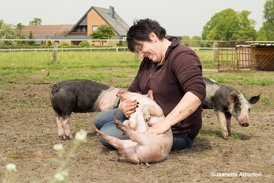 Schweineglück