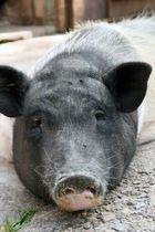 Schweinerei