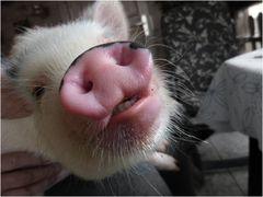 SchweineSchnäuzchen