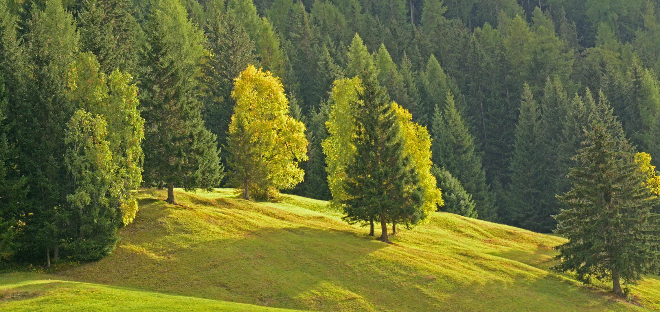 Schweizer Landschaften (29)