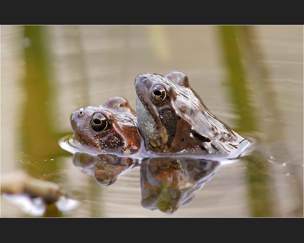 Schwerstarbeit bei Familie Frosch ...