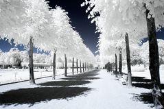 Schwetzingen Park