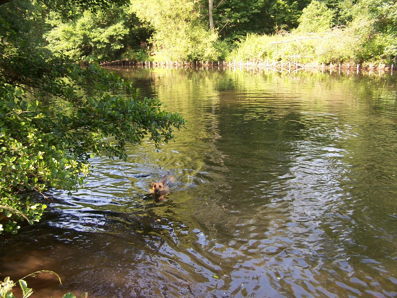 Schwimmen enspannt