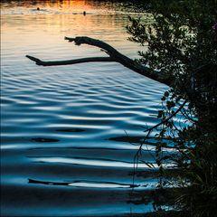 Schwimmen im See bei Sonnenuntergang