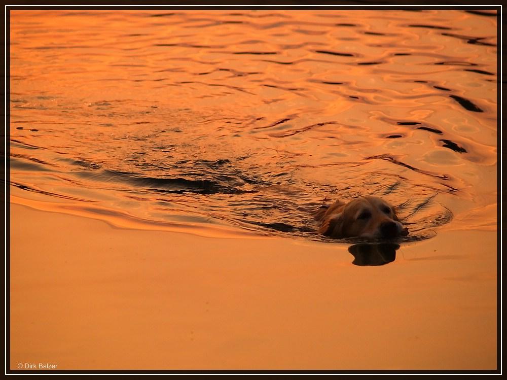 Schwimmen in der Abendsonne