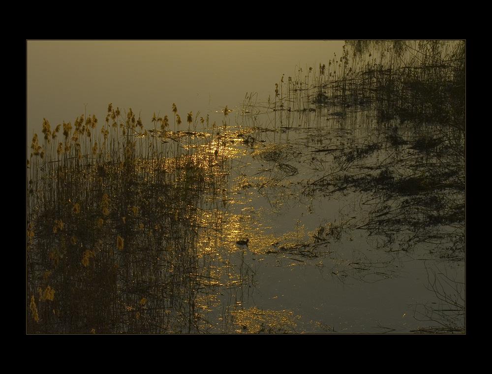 Schwimmend im Gold - gefangen im Netz...