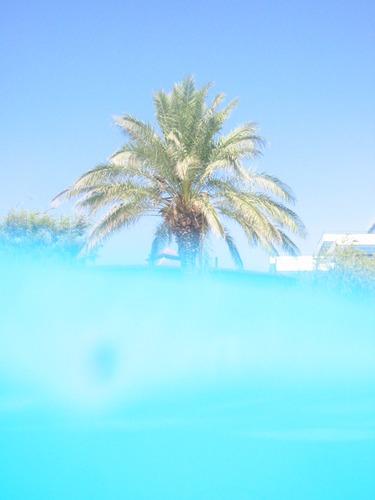 Schwimmende Palme....