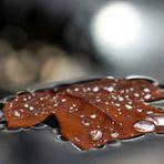 Schwimmendes Herbstblatt im Sonnenschein