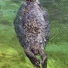 Schwimmendes Tönnchen