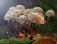 Schwindlinge unterm Lichtzelt